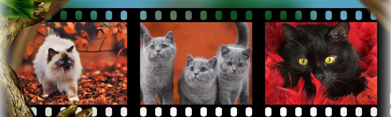 Cat-Best.com